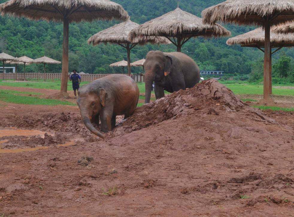No Elephant Nature Park, santuário sério no cuidado dos elefantes. <3