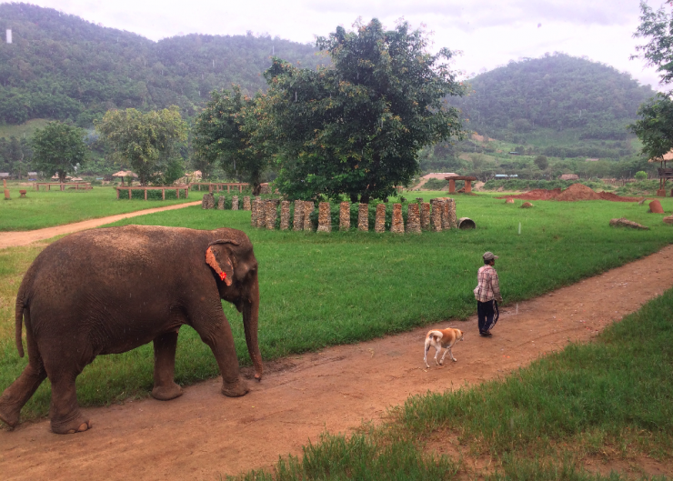 elefante nature park