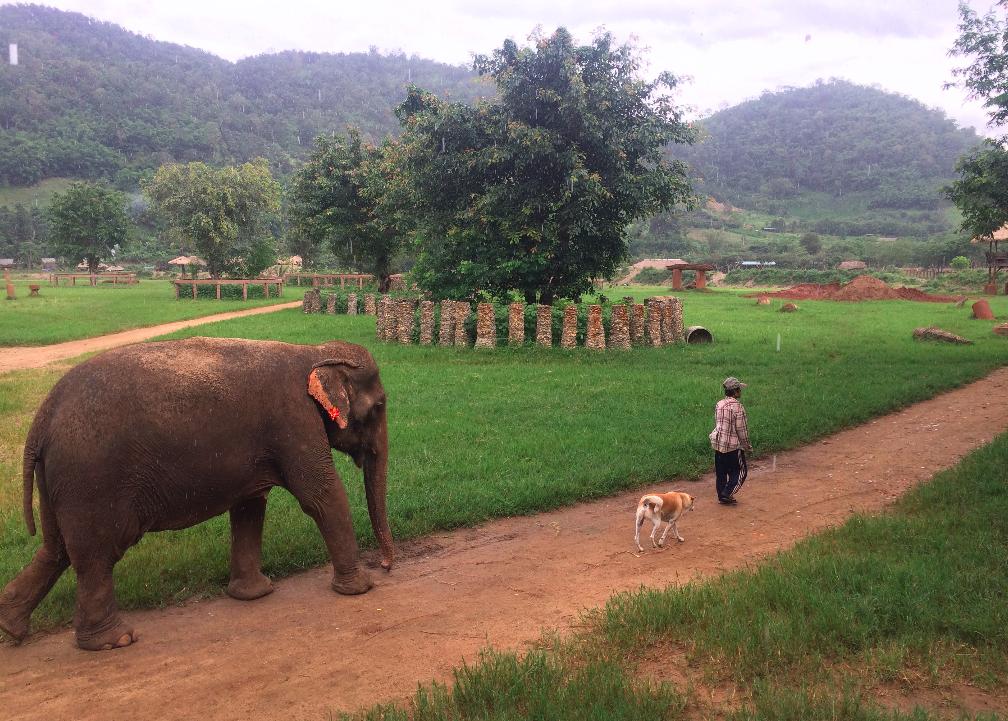 Elephant Nature Park – Um dia com elefantes em Chiang Mai, na Tailândia