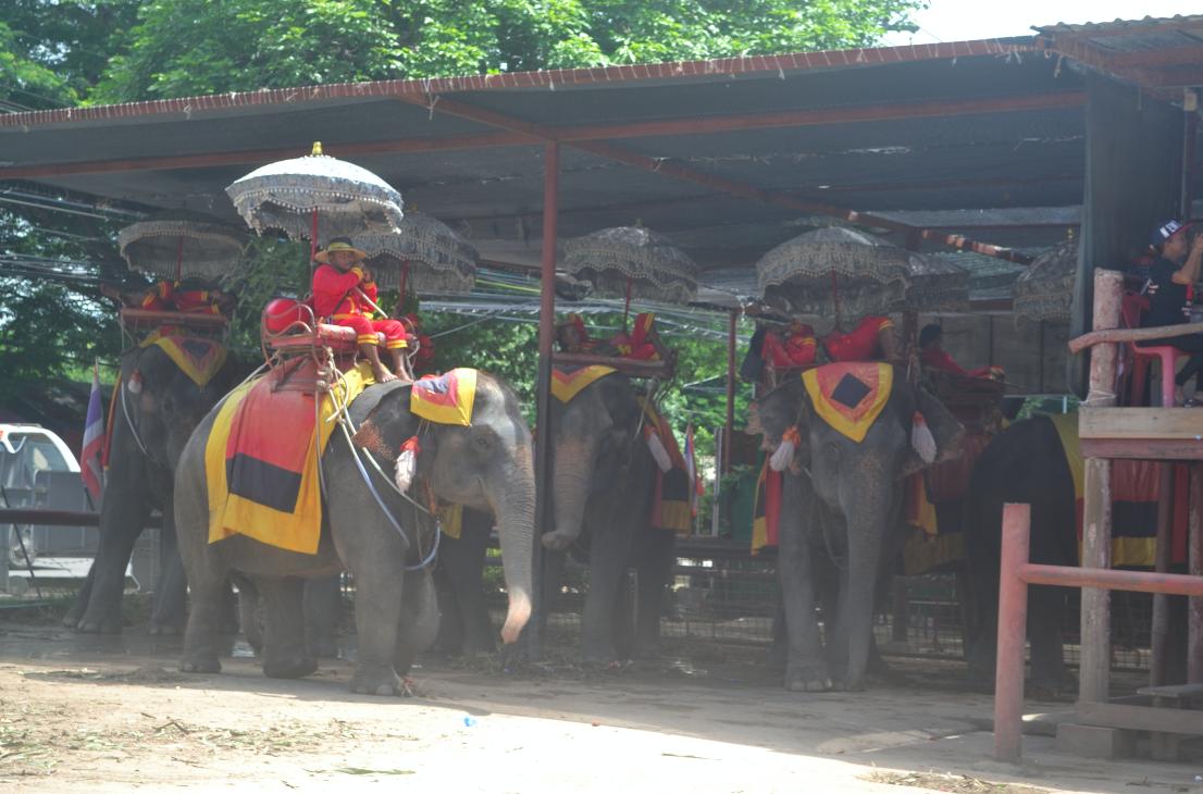 Vimos esses em Ayutthaya, na entrada de um dos templos. :(