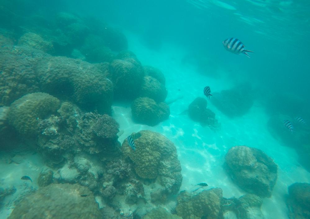 snorkeling tailandia