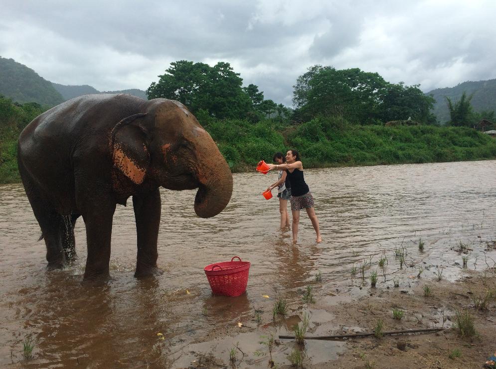 O Elephant Nature Park é mais caro do que outros passeios disponíveis, mas foi o que me passou mais confiança e seriedade. Pesquise e desconfie sempre dos passeios envolvendo animais. ;)