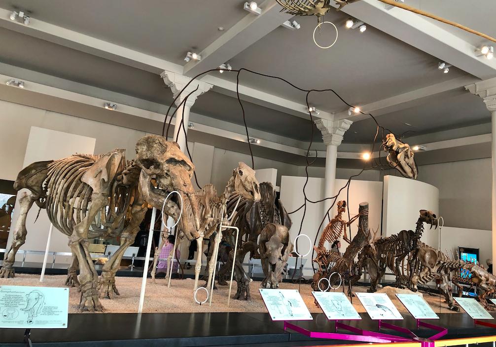 museu de historia natural de nova york