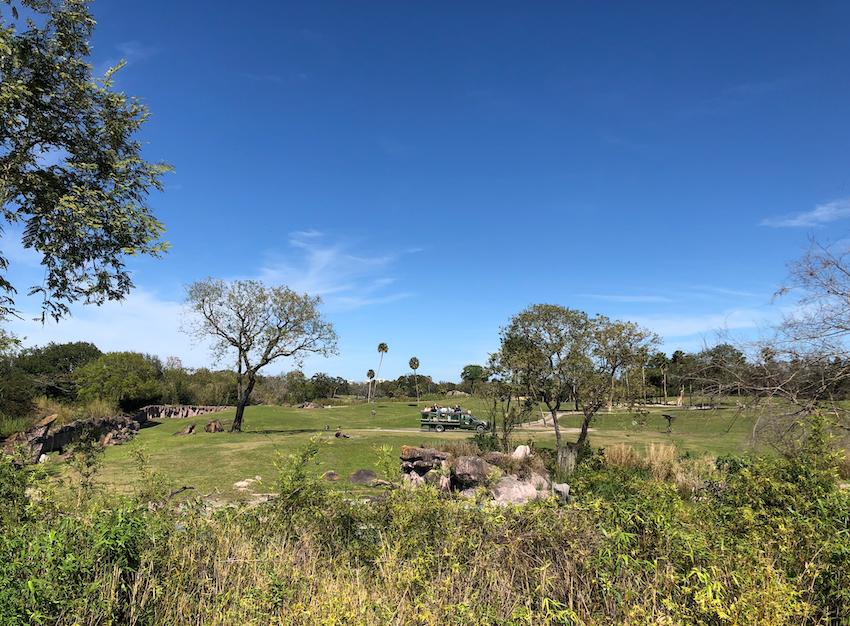 Parte do Safari no Busch Gardens em Tampa